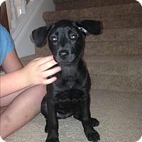 Adopt A Pet :: Ruby - Memphis, TN