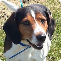 Adopt A Pet :: Cooper - Shelby, MI