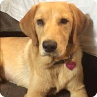 Adopt A Pet :: Penny Lane - Miami, FL