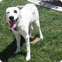 Adopt A Pet :: Rebel - Henderson, NV