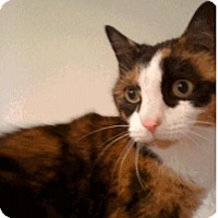 Adopt A Pet :: Gypsy_Courtesy Post - Columbia, MD