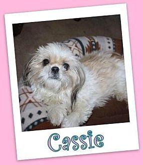 Shih Tzu Dog for adoption in Pataskala, Ohio - Cassie Clermont