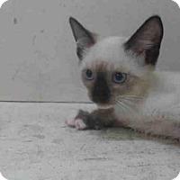 Adopt A Pet :: A354728 - Orlando, FL