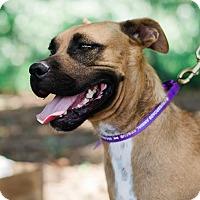 Adopt A Pet :: Lyra $125 - Seneca, SC