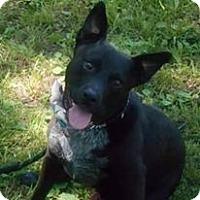 Adopt A Pet :: Dale - Channahon, IL