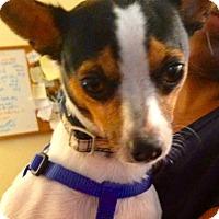 Adopt A Pet :: Jack - Hockessin, DE