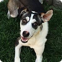 Adopt A Pet :: Alpine - Meridian, ID