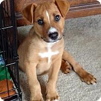 Adopt A Pet :: Mojave-Adopted! - Detroit, MI