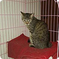 Adopt A Pet :: Kyra - Lacey, WA