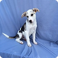 Adopt A Pet :: Oliver Twist - East Sparta, OH