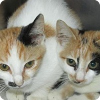 Adopt A Pet :: Cat N007+N008 - Rocky Mount, NC
