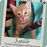 Adopt A Pet :: JUNIOR - Lincoln, NE
