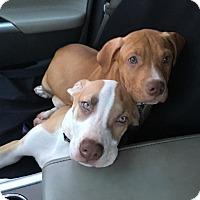 Adopt A Pet :: Malyk - Jerseyville, IL