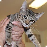 Adopt A Pet :: Ashley - Sunrise Beach, MO