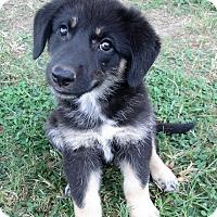 Adopt A Pet :: Demelza - Trenton, NJ