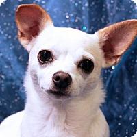 Adopt A Pet :: Sake - Arlington, VA