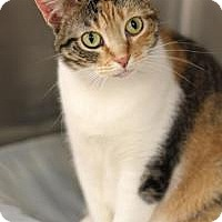 Adopt A Pet :: Heather - Yukon, OK