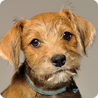 Adopt A Pet :: Jingles - Crossville, TN