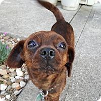 Adopt A Pet :: Tigger - Lexington, KY
