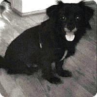 Adopt A Pet :: Blackberry Jam - Matthews, NC