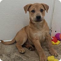 Adopt A Pet :: Olivia Marie - Snow Hill, NC