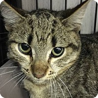 Adopt A Pet :: Jerry - Savannah, GA