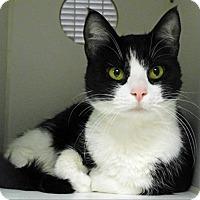 Adopt A Pet :: Cat-Astrophe - Topeka, KS