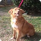 Adopt A Pet :: PRINCE CHARMING