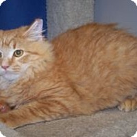 Adopt A Pet :: Hobbs - Colorado Springs, CO