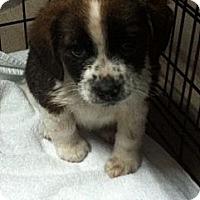 Adopt A Pet :: Fritzie - Hazard, KY