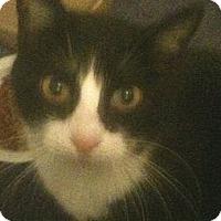 Adopt A Pet :: Lil Dot - Cocoa, FL