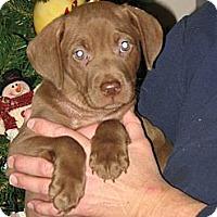Adopt A Pet :: Jonas - Albany, NY