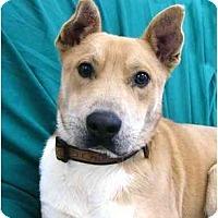 Adopt A Pet :: Hobart - Mocksville, NC