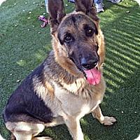 Adopt A Pet :: Rex - Redondo Beach, CA