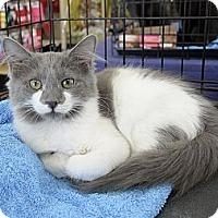 Adopt A Pet :: Yushi - Bradenton, FL