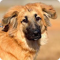 Adopt A Pet :: Violet - Dacula, GA
