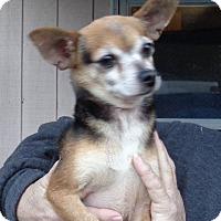Adopt A Pet :: Chico - Crump, TN