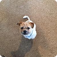 Adopt A Pet :: GRIFFIN - Boca Raton, FL
