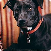 Adopt A Pet :: Jessie - Portland, OR