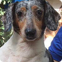 Adopt A Pet :: Tinkerbell - geneva, FL