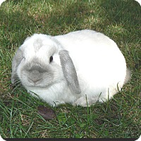 Adopt A Pet :: Kirby - Conshohocken, PA