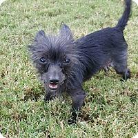 Adopt A Pet :: Stella - Uxbridge, MA