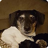 Adopt A Pet :: Marty - PORTLAND, ME