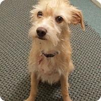 Adopt A Pet :: Wendy - Encino, CA