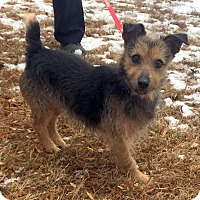 Adopt A Pet :: Payday - Bloomfield, CT