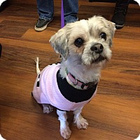 Adopt A Pet :: Marsha - Newtown, CT