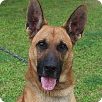 Adopt A Pet :: BLAZE - Red Bluff, CA