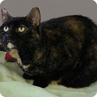 Adopt A Pet :: Foxy - Rochester, NY