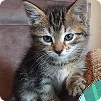 Adopt A Pet :: Shanti - Duluth, GA