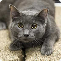 Adopt A Pet :: Grayson - Kettering, OH